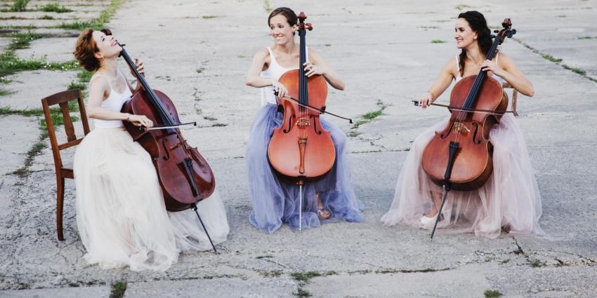 Künstler der Woche Fine Arts Soloists