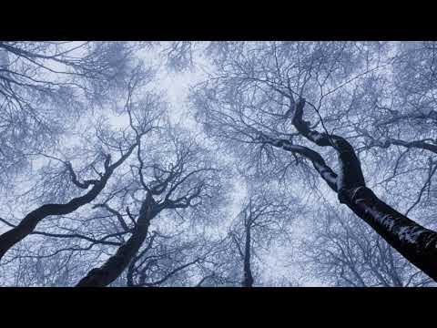 Video: Buch des Lebens