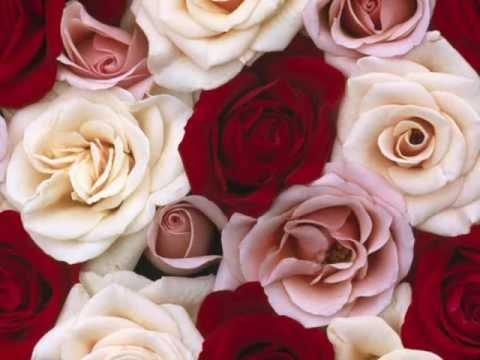 Video: The Rose (Bette Midler)